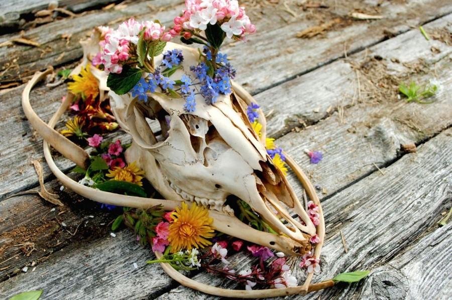 Череп и цветы