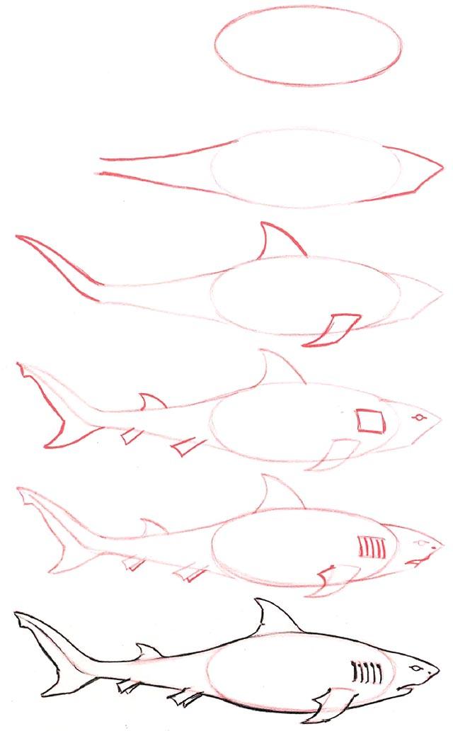 Рисуем карандашом поэтапно акулы