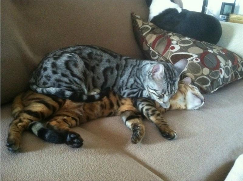 Любовь котеек