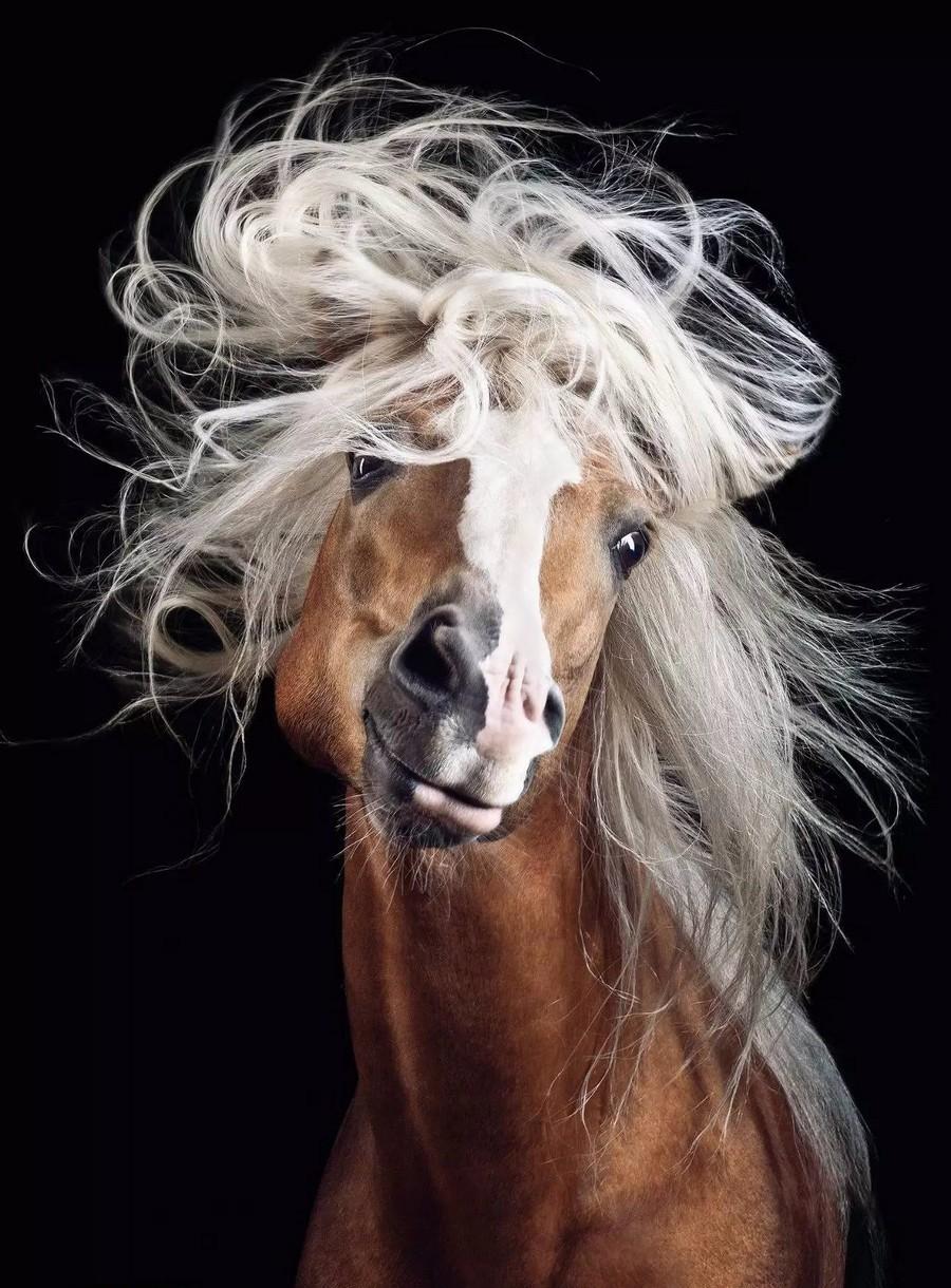 Конь в парике