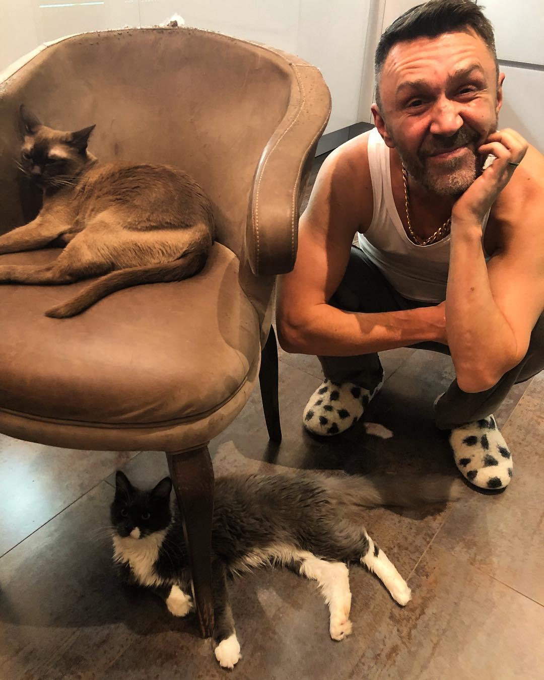 Картинки по запросу кот шнурова