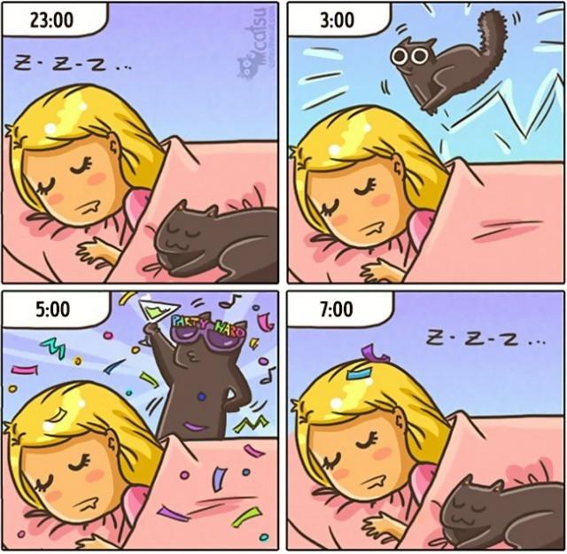 Режим кота