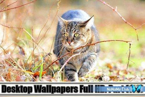 Обои - Desktop Wallpapers Full HD. Part (110) [JPG]