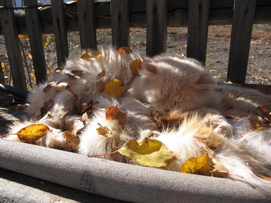 Осенние котейки
