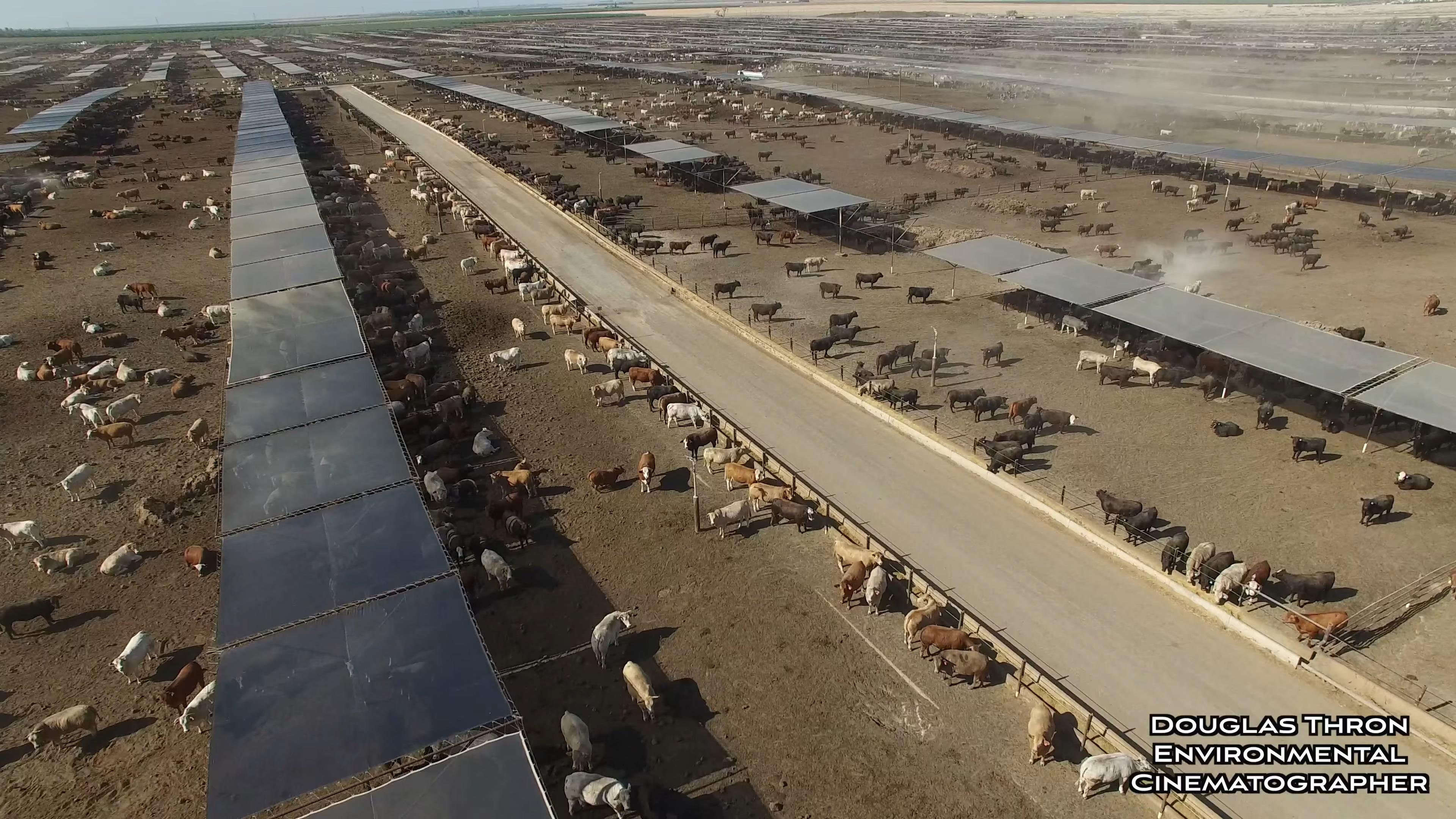 Животноводство в Калифорнии / Livestock in California (2017/WEBRip) 2160p, 4K