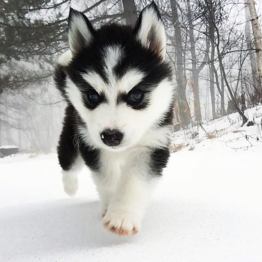 Суровый щенок