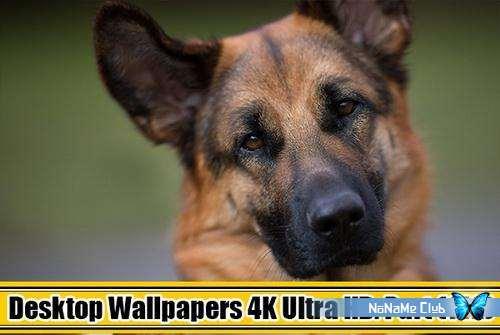 Обои - Desktop Wallpapers (4K) Ultra HD. Part (142) [JPG]