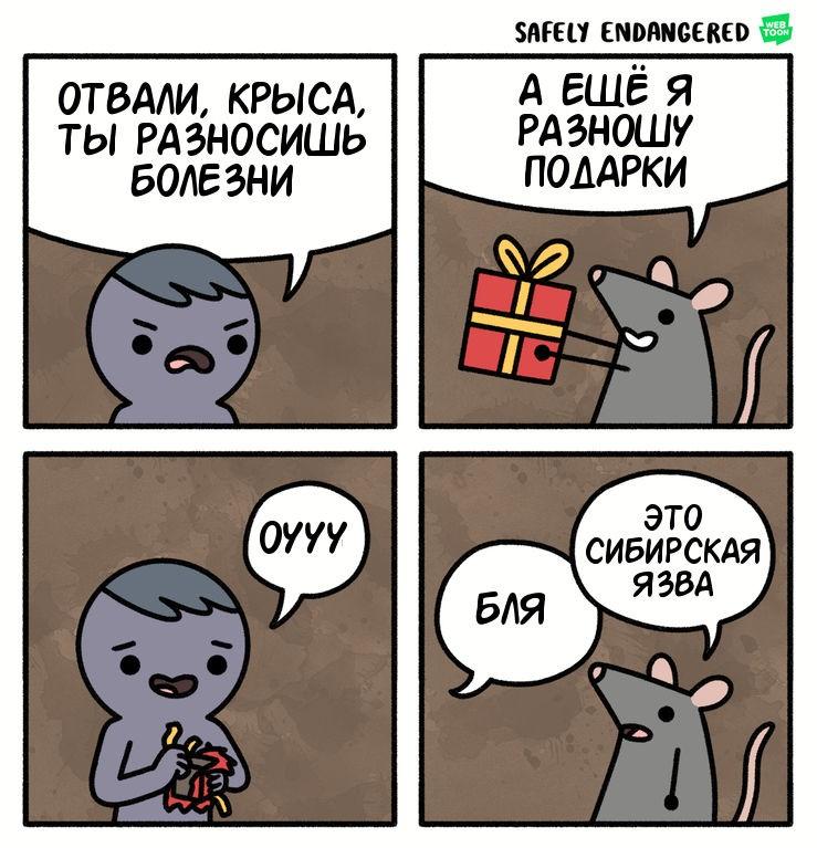 Подарки от крысы