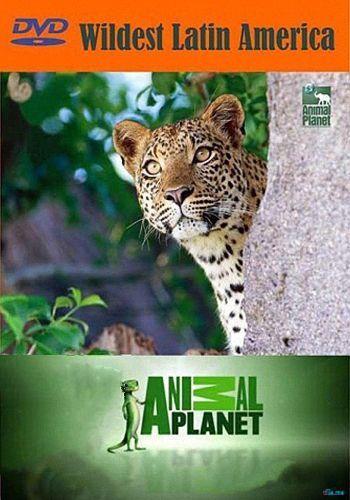 Animal Planet: В дебрях Латинской Америки / Wildest Latin America (2012) HDTV [H.264/1080i-LQ] (сезон 1, эпизоды 1-5 из 5)