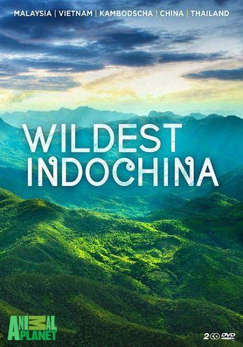 Animal Planet: Неизведанный Индокитай / Wildest Indochina (2014) HDTV [H.264/1080i-LQ] (сезон 1, эпизоды 1-5 из 5)