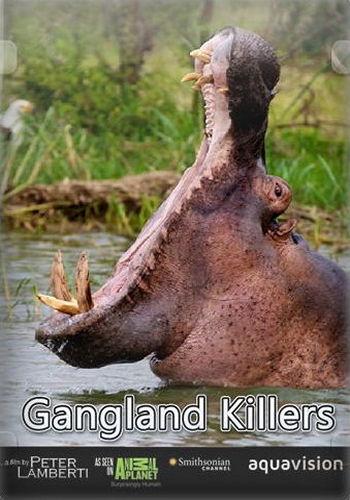 Animal Planet. Гангстеры дикой природы / Gangland Killers (2014) HDTV [H.264/1080i-LQ] (эпизоды 6 из 6)