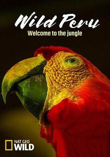 NGW: Дикая природа Перу: Добро пожаловать в джунгли / Wild Peru (2018) HDTV [H.264/1080i-LQ]