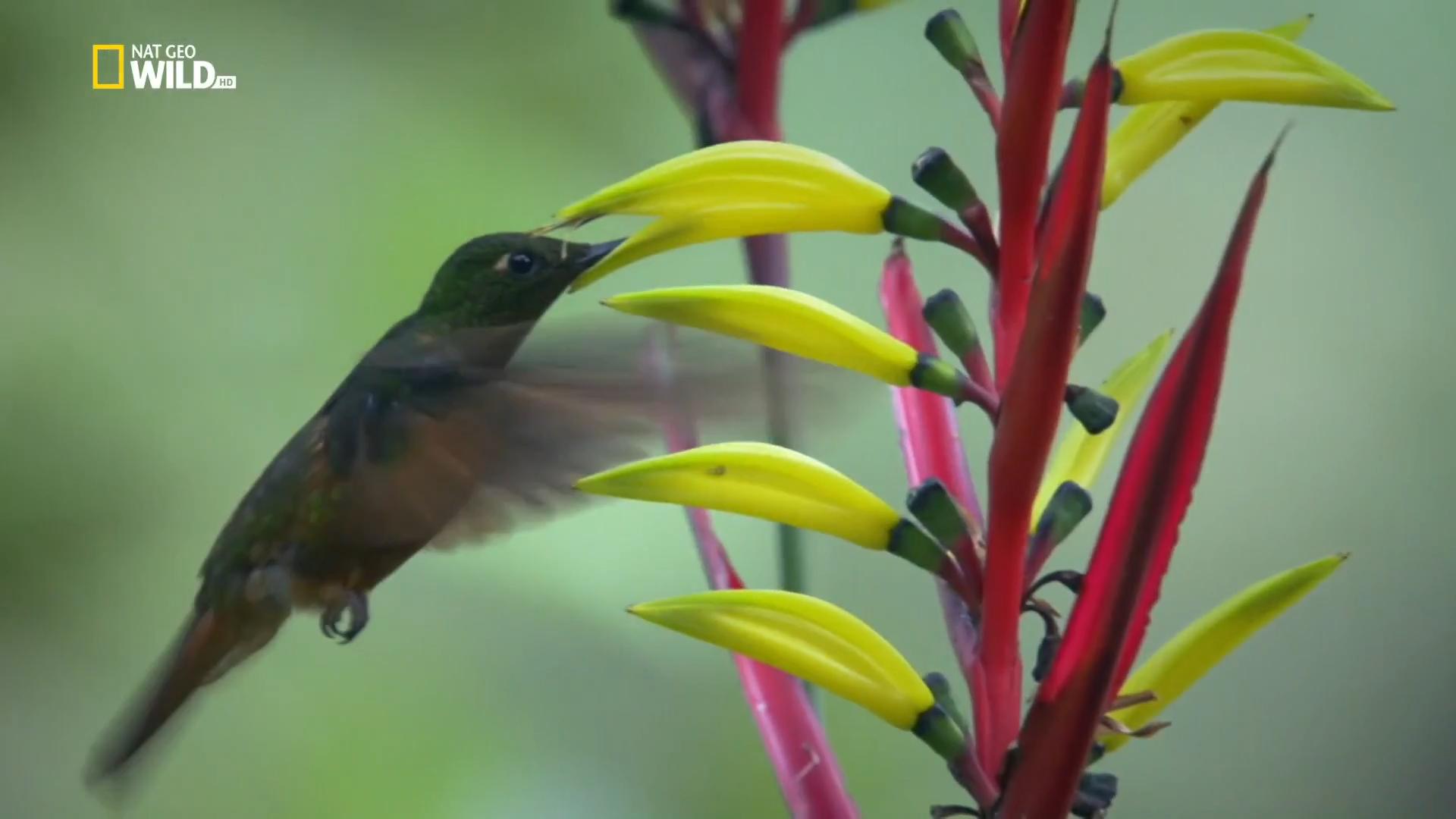 Потерянный рай Колумбии / Wild Colombia's Lost Eden (2016/HDTVRip) 1080р