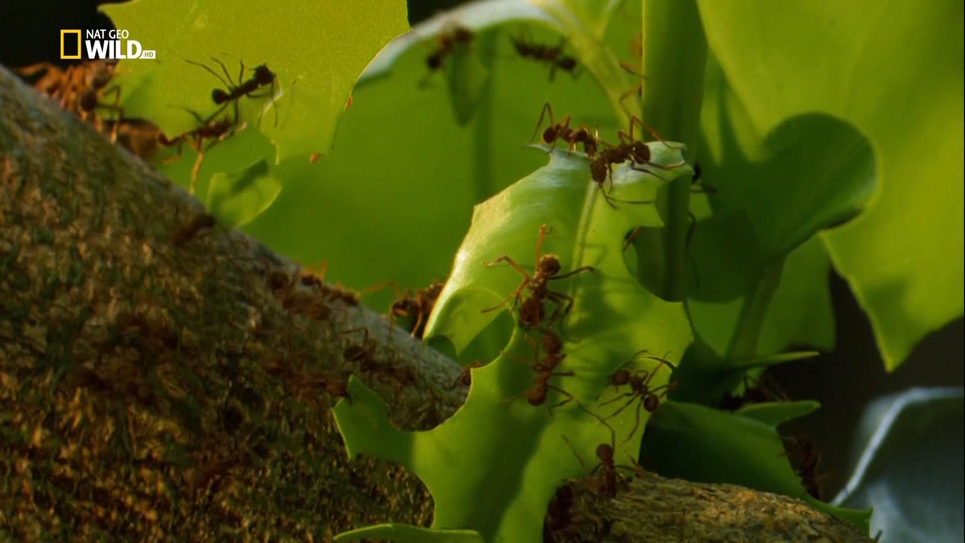 Выжить несмотря ни на что / Extreme Survivors (2014/HDTV) 1080i