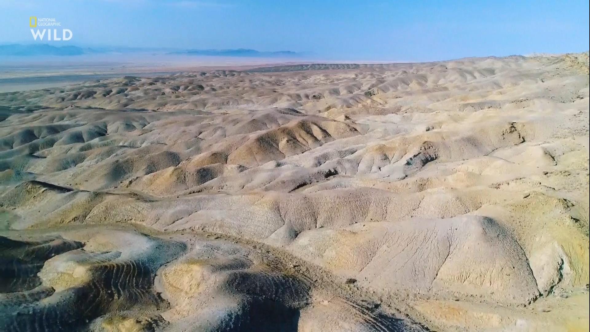 Дикая Монголия: страна крайностей. Выжившие в пустыне / Wild Mongolia. Land of Extremes (2018/HDTV) 1080i