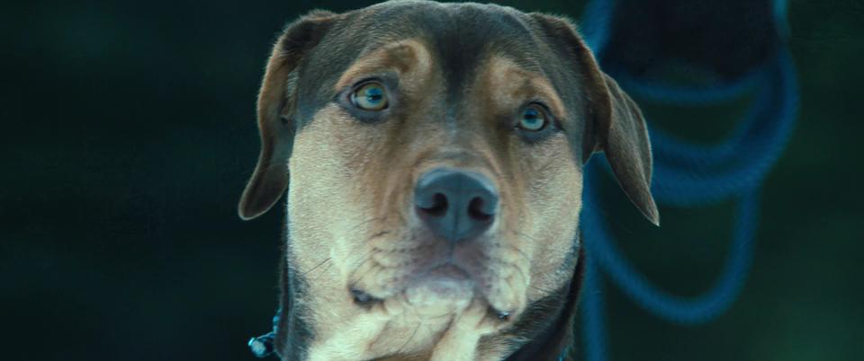 A Dog's Way Home.mkv_snapshot_00.53.31.625.png