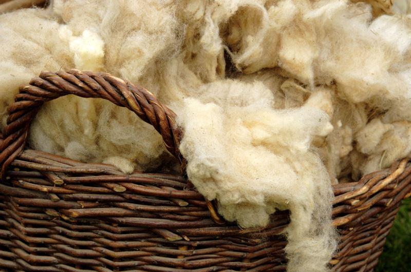 Полезные свойства шерсти