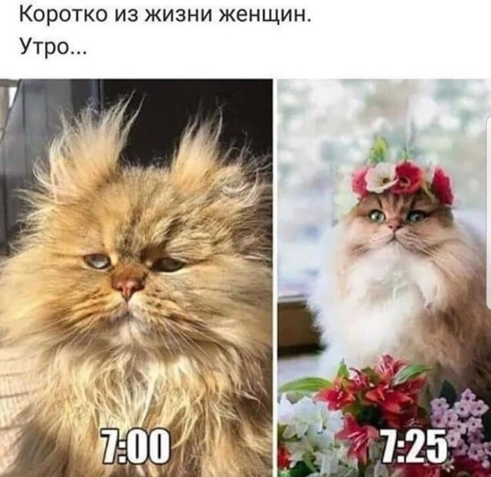 https://i2.imageban.ru/out/2020/02/21/6266c420d2a87b7f5555756ed44334c5.jpg