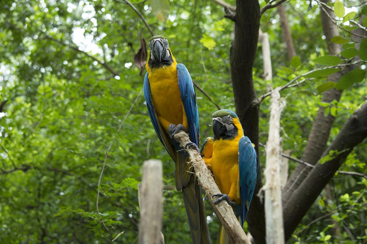Бразильские джунгли