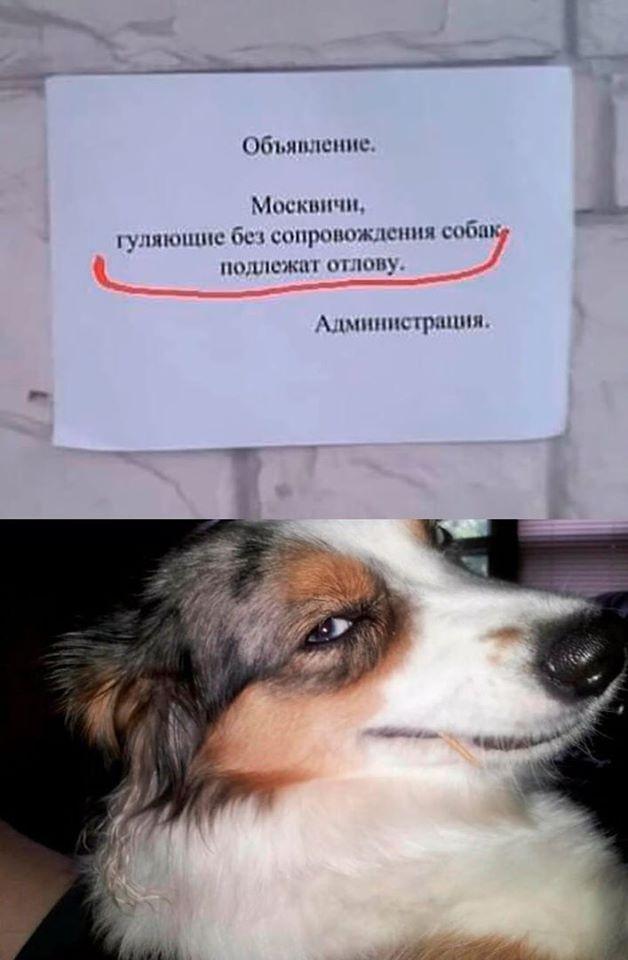 https://i2.imageban.ru/out/2020/04/05/6078615f1f8b4a72fd2422f40c95bdde.jpg