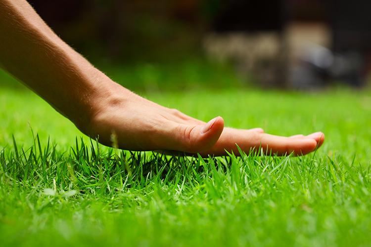 Рулонные газоны: как выбрать покрытие, которое вас устроит