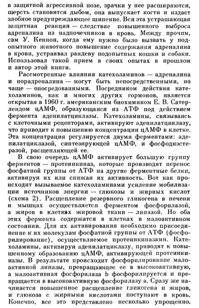 https://i2.imageban.ru/out/2020/06/02/977624ee20f4151e7a03134c8d5805aa.jpg