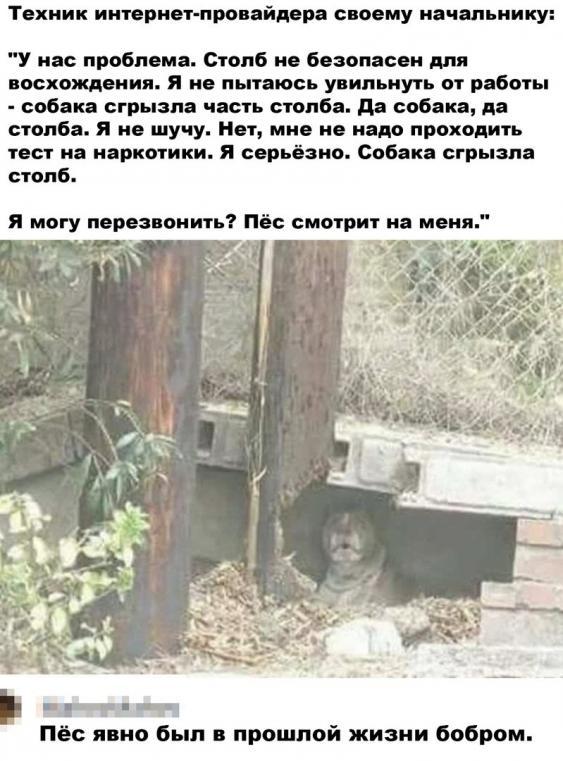 https://i2.imageban.ru/out/2020/09/01/3d74ce556419ec7b3dd334ecc6d47375.jpg