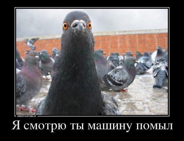 https://i2.imageban.ru/out/2021/03/05/c1552c575e8a006e6d9e04c4961c70da.jpg