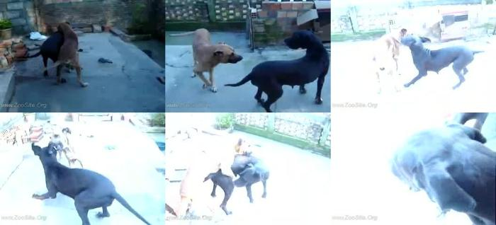 90f3a674bfd50fc35147823cd523c0d4 - Nina X Gurizinho Animalsex - Mating ZooSex Videos