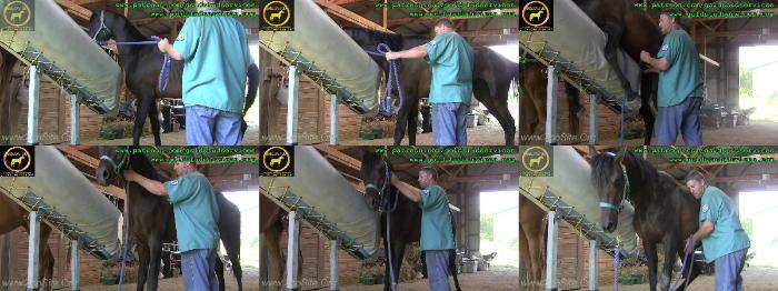9e870c5836f1ee0e2794dcc9fd429499 - Semen Collection Via Crump  Phantom Training - Mating ZooSex Videos