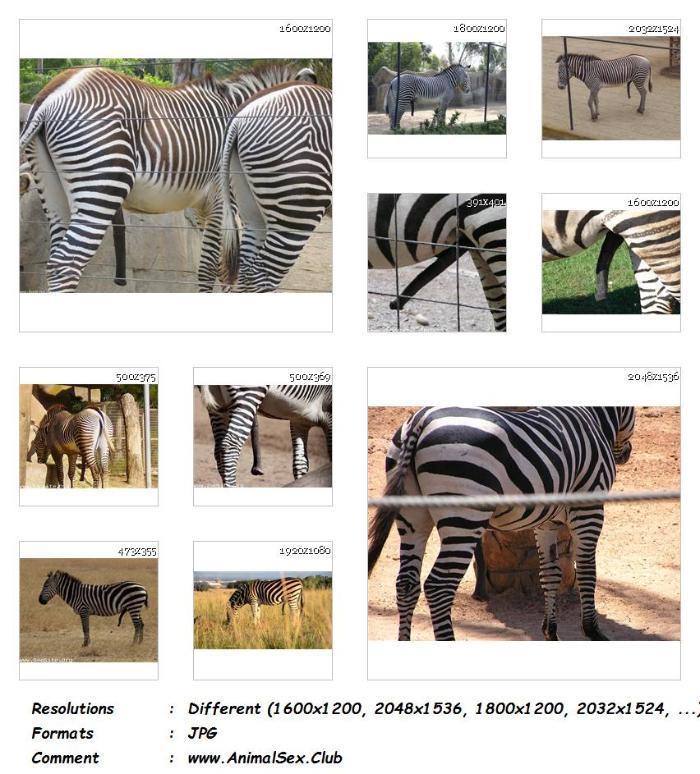 ddb6b33f669af54daf9716bdcb8e718f - Horny Zebras Bestiality - 35 Pics - Animal Sex Genitals Pictures