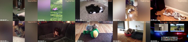 0156_FUN_Humpy_Dogs_Fails_-_Funny_Dogs_Fails_-_Dog_Hump_Fails_Compilation.jpg