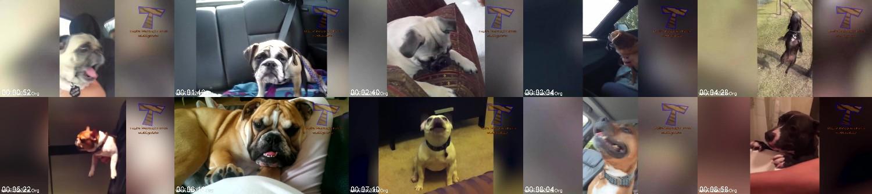 0299_FUN_Worlds_Funniest_Dogs.jpg