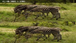Дикие животные южной Африки в 3Д / Wildlife Südafrika / Wildlife South Africa 3D   Вертикальная анаморфная