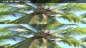 ������� 3D - ����� ������� ���� � 3� / Der Dschungel 3D - Zauber einer anderen Welt 3D ������������ ����������