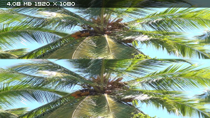 Джунгли 3D - Магия другого мира в 3Д / Der Dschungel 3D - Zauber einer anderen Welt 3D Вертикальная анаморфная