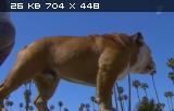 Скачать фильм Самые умные животные (2012)