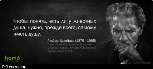http://i2.imageban.ru/thumbs/2013.10.11/5b41c11d215942c15e503282fbad7c04.jpg