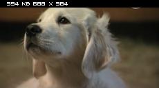 Приключения Бэйли: Потерянный щенок / Adventures of Bailey: The Lost Puppy (2010) SATRip | DVO