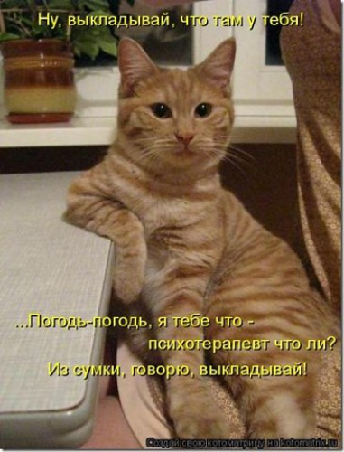 http://i2.imageban.ru/thumbs/2017.07.19/d7054ef86dbfbc14a13a213dd1c580b6.jpg