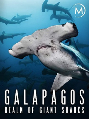 Галапагос. Царство гигантских акул / Galapagos: Realm of Giant Sharks (2012) HDTV 1080i