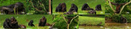 05a298235be794b4cc8b0bca8a8d6e63 - Crazy Monkey Sex