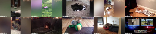 0bbb6a1de3a07d97cf9c434620f52b3b - Humpy Dogs Fails - Funny Dogs Fails - Dog Hump Fails Compilation