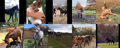 14fcc61b20beccfb197903ee31c6ff91 - Sexy Horse! Cute And Funny Horse Videos Compilation Cute Moment 31