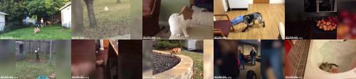21ac60a0177bf204f2299fa4059e1630 - Try Not To Laugh Animals Funny Pet Fails Compilation 2018 Epic Pet Videos And Moments