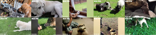 5a40b11b9060c951b483e66b7ad76cea - Relaxing Your Mind By Funny And Cute Moments Dogs Playing With Cutei Baby Animals