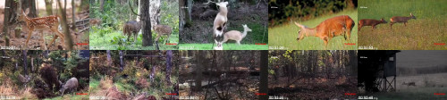 5eab3e0f3bdb116cf472c301370a641f - Deer Mating How Do Deer Mating Real Video Wild Animals Mating Compilation