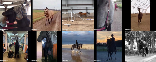 8431d3a097884a8449e87ff0a59fea6a - Sexy Horse! Cute And Funny Horse Videos Compilation Cute Moment 30