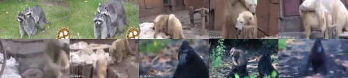 dab6ce457074d048be46050cbeba663d - Animal Mating Video Donki Meeting Video Animal Sex Video Cow Mating Bull Mating